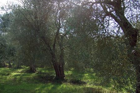 oliveti_fabiani